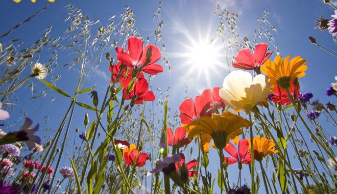 fleurs-a-offrir